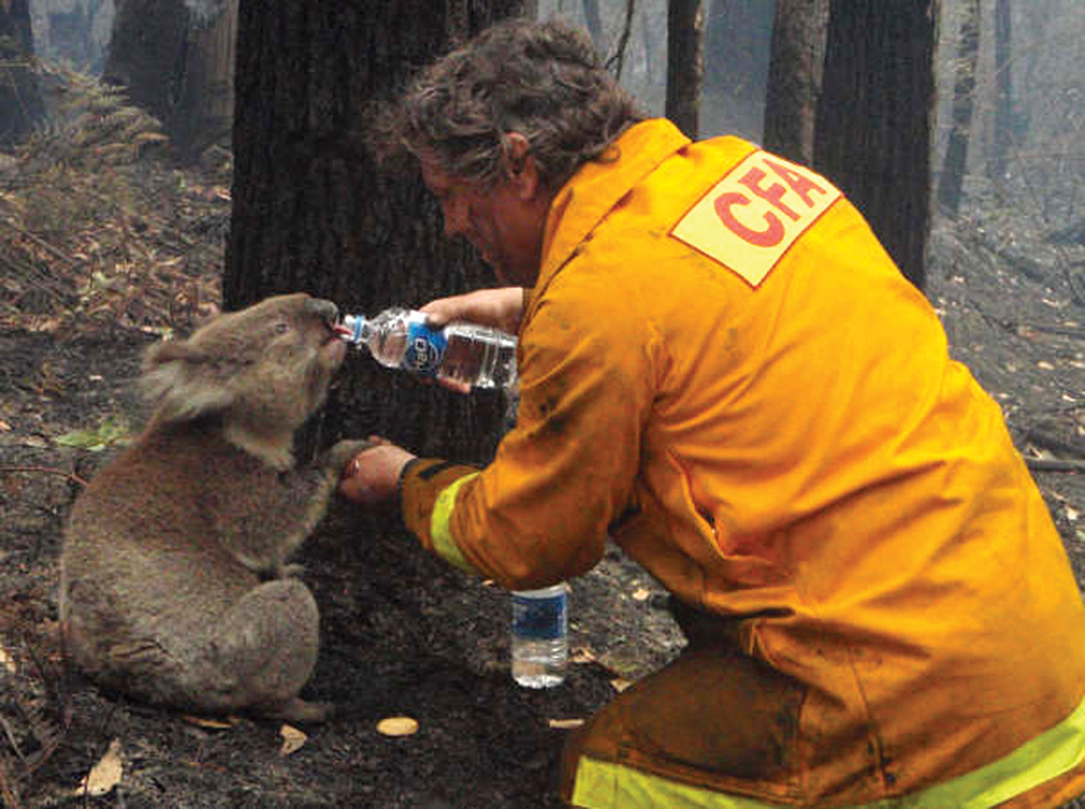 firefighter gives water to koala