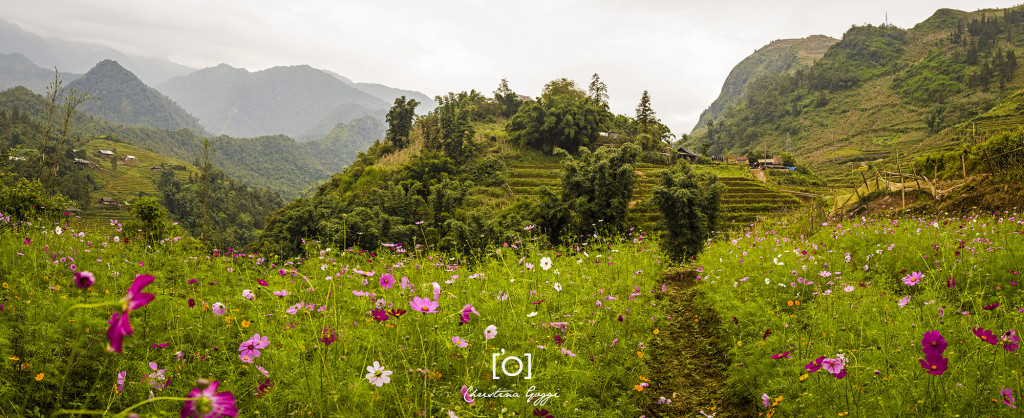 Sapa field with flowers